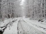 W Górach Opawskich już zima. Utrzymuje się pierwszy śnieg