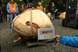 XIII Festiwal Dyni w Ogrodzie Botanicznym. Największa dynia ma ponad pół tony (ZDJĘCIA)