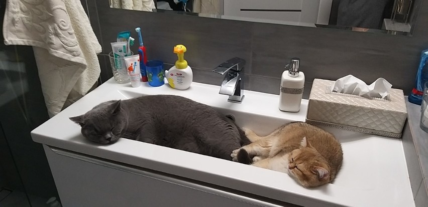 Kto ma w domu kota, ten wie, jakie to urocze zwierzęta....
