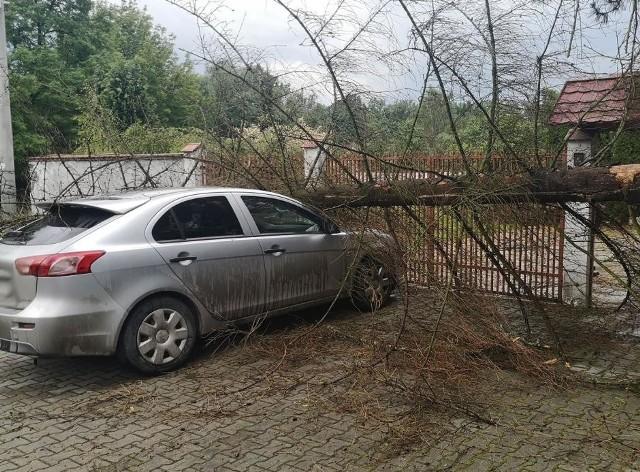 Na os. Krzyszkowice w Wieliczce drzewo przewróciło się na zaparkowany samochód