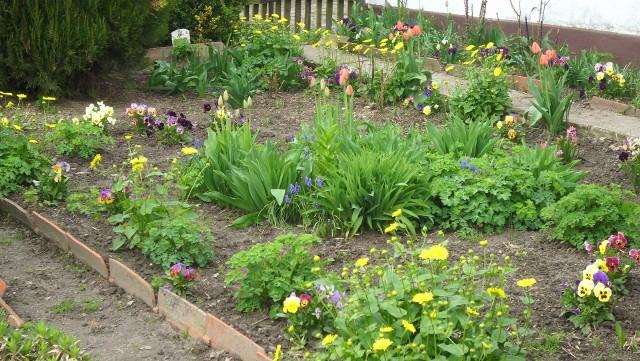 majowy ogródek W maju ogród nabiera barw. Natura ponownie się do nas uśmiecha. Na rabatkach kwitną tulipany, narcyzy i niecierpki.