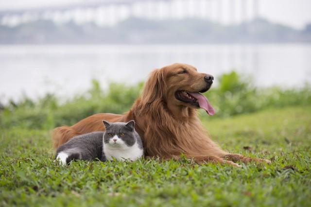 Zgodnie ze stereotypami ludzie dzielą się na psiarzy i kociarzy, a co jeśli nie chcesz wybierać, a pod swój dach chcesz przygarnąć zarówno kota i psa? Sprawdź, które rasy psów lubią koty.