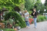 Ogrody Kapias kwitną latem i cudownie pachną. Zieleń działa kojąco na gości
