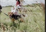W Pabianicach odbędzie się zlot adoptowanych psów i ich nowych właścicieli