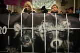 Piątka dla zwierząt. Ekolodzy: fermy futerkowe trzeba zamknąć i skończyć z okrutnymi praktykami. Rolnicy: ta ustawa jest antypolska
