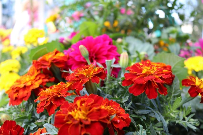 Są takie rośliny, które ozdobią balkon lub ogród, a przy...