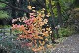 Jesień w Ogrodzie Botanicznym. To już ostatnie dni w tym sezonie [ZDJĘCIA]