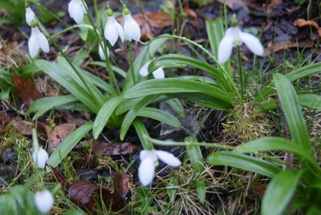 Powoli i nieśmiało witamy wiosnę! Jej pierwsze oznaki widać w całym województwie