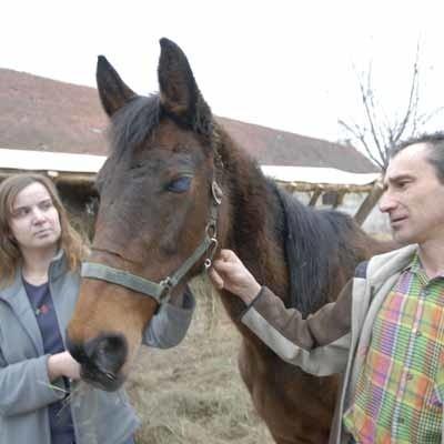 Ewa Mastyk i Krzysztof Skałecki ze ślepą Kabałą, jednym z uratowanych koni obecnie cieszącym się życiem w Wojnowie