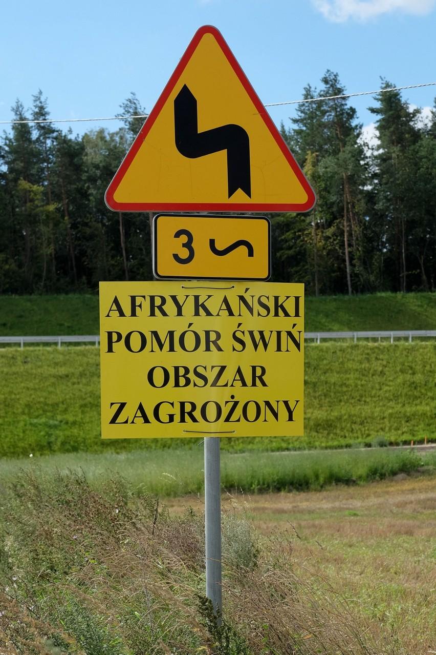 Afrykański pomór świń jest coraz bliżej województwa łódzkiego