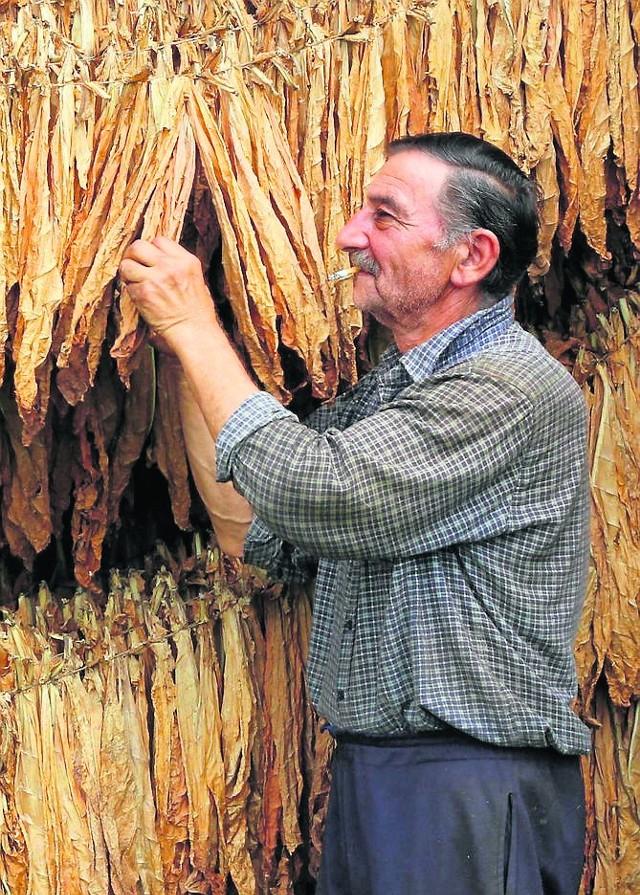 Stara branża tytoniowa umiera. Rodzi się nowa?