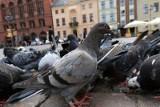 Czy można karać za dokarmianie ptaków? Czy wolno zakleić ceną datę przydatności do spożycia?