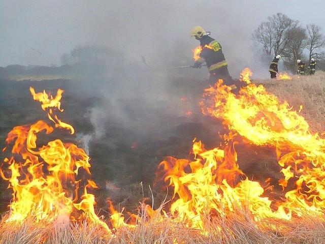 Strażacy ze Skwierzyny kilka razy gasili płonące trawy w okolicach Murzynowa.