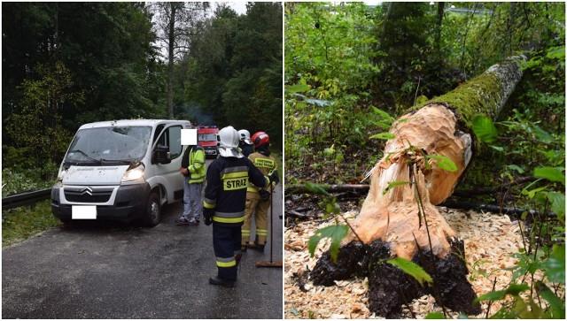 Dzisiaj (18.09.2021 r.) po godzinie 10 na jadące auto spadło drzewo podcięte przez bobry. Do wypadku doszło na odcinku drogi powiatowej Wałdowo-Czarnica (gm. Miastko).