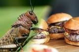 Kaufland wprowadza do sprzedaży żywność z... owadów. Co można kupić? Na początek jedzenie z owadów dostępne w Chorwacji