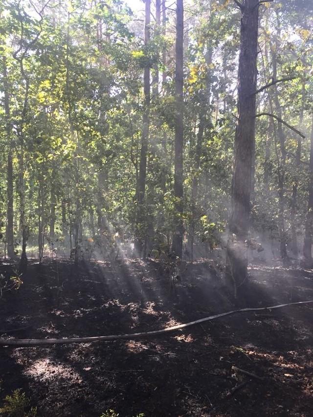 Po raz kolejny na terenie gminy Konopnica doszło w poniedziałek, 28 maja, do pożaru lasu. Zarówno strażacy jak i policja nie mają wątpliwości, że kryje się za tym podpalacz.- W poniedziałek, około godziny 15:20 zostaliśmy zadysponowani do pożaru lasu w Konopnicy. Ogień pojawił się niedaleko pożaru, przy którym byliśmy na początku maja. Las po raz kolejny został podpalony umyślnie. Spaleniu uległo około 0.5 ha poszycia leśnego oraz nadpalone zostało kilka drzew. Ogień mógł się bardzo szybko przenieść na większy obszar. Jednak dzięki szybkiej reakcji jednostek nie doszło do poważnego pożaru. Nadal apelujemy o pomoc mieszkańców gminy, jeśli zauważą coś niepokojącego, podejrzanych ludzi w lesie prosimy zgłaszać to na policję - apelują strażacy z Szynkielowa.