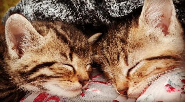 Koty to piękne i inteligentne zwierzaki. Ale również niezwykle zabawne. Dziś publikujemy trzecią część tej wielkiej galerii. Zobaczcie!>>>