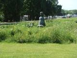 Łąki kwietne: Coraz więcej powstaje ich w miastach. Powstaną także w Poznaniu? Chcą tego społecznicy