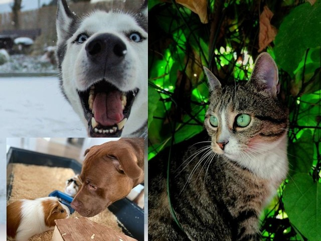 Blisko 50 zdjęć zwierząt przesłano do konkursu organizowanego przez Wąbrzeski Dom Kultury