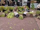 Rozpoczęły się zbiory tytoniu w przygranicznym Vierraden