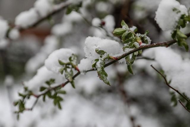 Jaka będzie zima 2020/21? Mamy pierwszą prognozę pogody! Zobaczcie