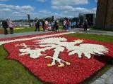 Dywany tulipanów w Spycimierzu. Obrazy z 300 tysięcy kwiatów