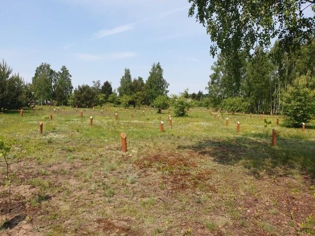 Na uroczysku Lublinek pozostało już miejsce tylko na 100 drzew.