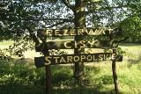 Powiat tucholski. Czy Rezerwat Cisów będzie dostępny na wiosnę?