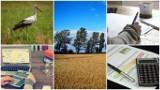 Krajowy Ośrodek Wsparcia Rolnictwa - czym się zajmie? Nowa agencja zamiast ANR i ARR