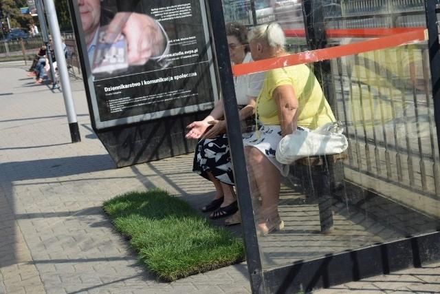 W poniedziałek skrawki trawników pojawiły się na przystankach autobusowych w centrum. Mają promować niedzielny happening