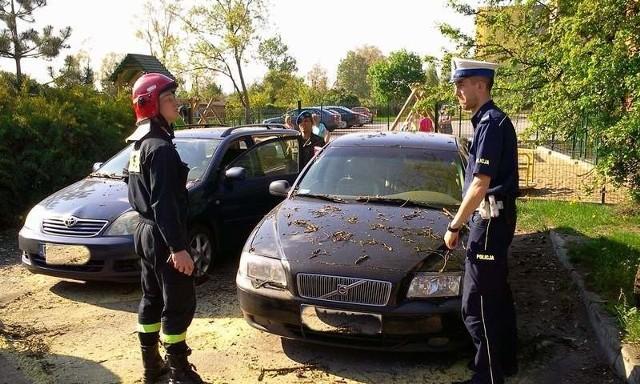 Tir wyrwał drzewo z korzeniami, które spadło na samochody