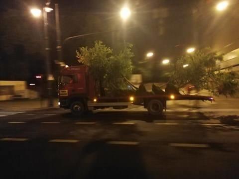 Nocne usuwanie drzew z Lipowej zablokowali mieszkańcy