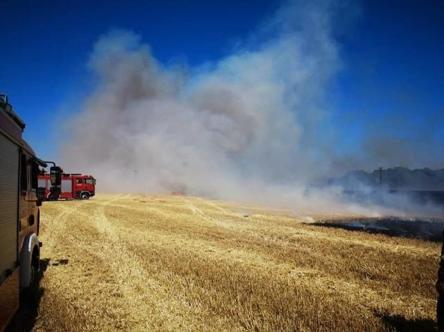 W niedzielę, 30 czerwca wybuchł największy pożar ostatnich lat na terenie Wielkopolski. Między wsiami Dusina a Daleszyn, w powiece gostyńskim spłonęło 170 hektarów. Akcja strażaków trwała 17 godzin i zakończyła się 1 lipca przed godziną 7. - Na razie straty są nie do oszacowania. Musimy odnaleźć wszystkich właścicieli pól, które płonęły - mówi kpt. Marcin Nyczka, rzecznik prasowy Komendy Powiatowej PSP w Gostyniu. Udział w akcji wzięło ponad 30 zastępów jednostek z całej Wielkopolski. Strażacy przyznają - w tak trudnej akcji w ciągu ostatnich kilkunastu lat nie brali udziału.