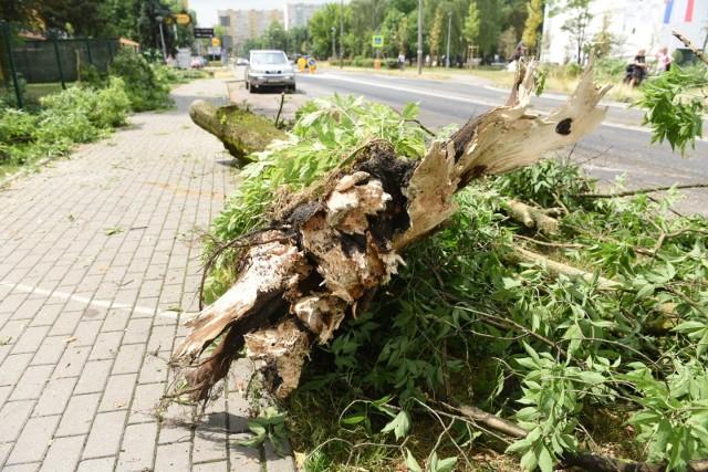 Wiatr złamał konary drzew przy ul. Bażyńskich w pobliżu przedszkola