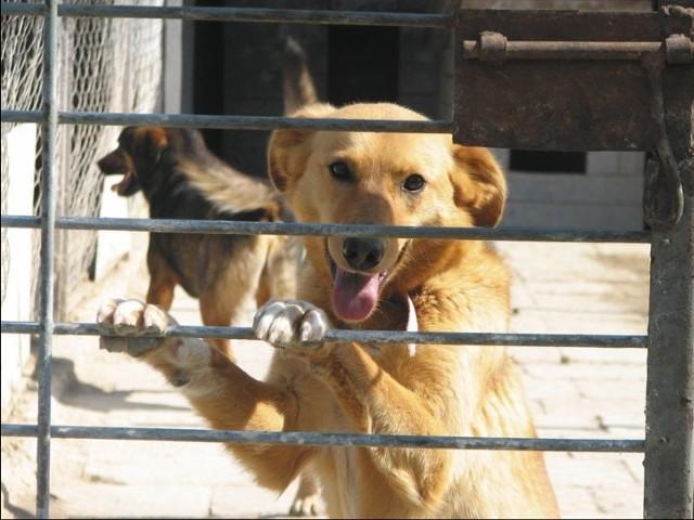 Psy z hajnowskiego schroniska liczą na pomoc dobrych ludzi