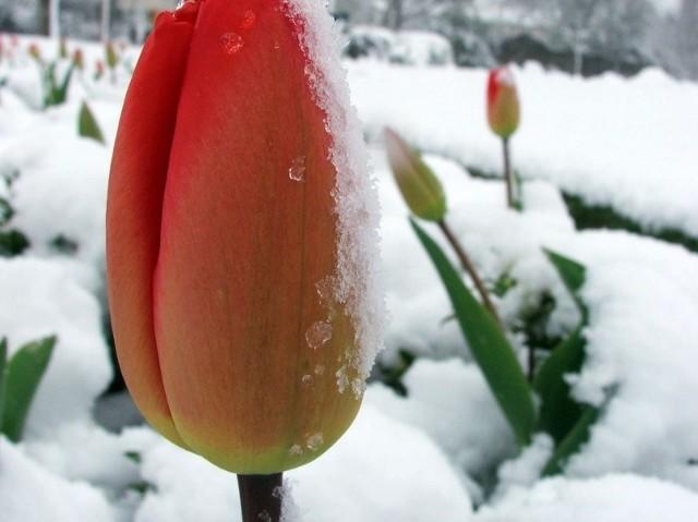 Już teraz pomyśl o przygotowaniu ogródka do wiosny