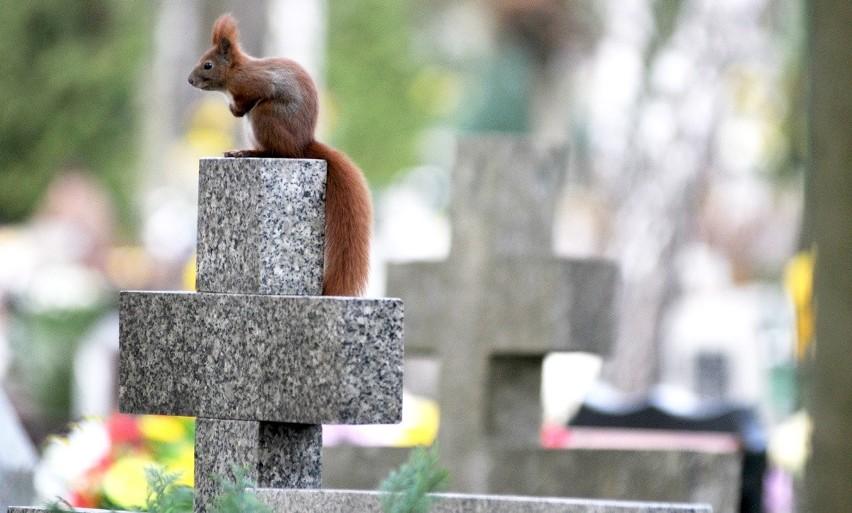 ZIELONA GÓRA. Stary cmentarz przy ul. Wrocławskiej w Zielonej Górze wymaga dodatkowego oświetlenia?