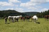 Dolny Śląsk: Ktoś zastrzelił konia wartego prawie pół miliona złotych?