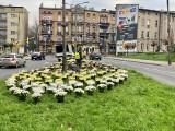 Chryzantemy ozdobiły skwer przy ul. Miarki w Bytomiu. Miasto kupiło je od lokalnych przedsiębiorców