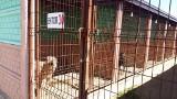 Urzędnicy ze Skępego skontrolowali schronisko w Wojtyszkach. Te psy z gminy czekają naadopcję