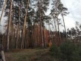 Kronawirus. Kolejne obostrzenia rządu. Czy można nadal iść na spacer do lasu?