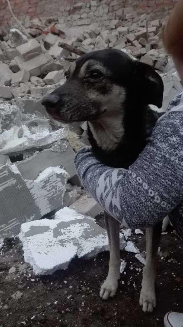 Tosia czeka na swoich opiekunów. Przetrwała kilka dni pod gruzowiskiem.