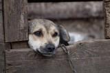 Pełnomocnik ds. praw zwierząt to za mało, uważają ich obrońcy. Chcą rzecznika dla zwierzaków
