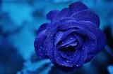 Mądre wierszyki na Dzień Matki do wysłania SMS, MMS, Messenger! Najpiękniejsze życzenia na Dzień Matki! Dzień Matki 2021 15.05.2021