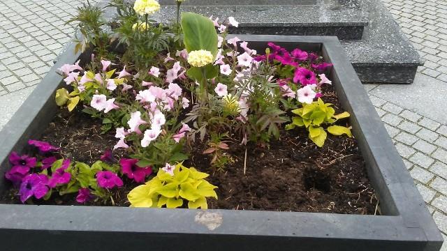 Ktoś znów zabrał kwiaty z miejskich rabat. O sprawie poinformował na swoim Facebooku Zakład Gospodarki Komunalnej w Zielonej Górze.