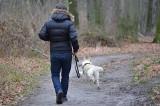 Za spacer z psem w lesie możesz dostać mandat nawet do 5 tys. zł. Warto przestrzegać przepisów i poznać te zasady!