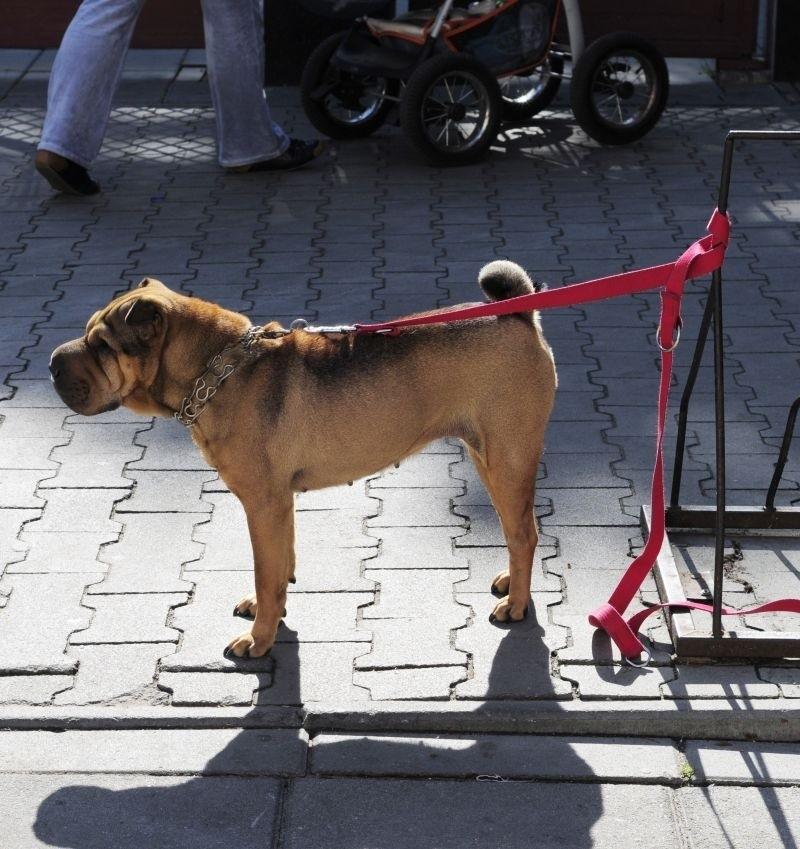W upalne dni zostawianie psa w słońcu, przed sklepem to...