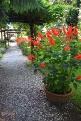 Parafialny ogród botaniczny w Bujakowie stracił twórcę i opiekuna, ks. kanonika Jerzego Kempę ZDJĘCIA