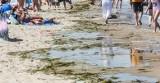 Sinice 2019. RAPORT [AKTUALNA LISTA] Zamknięte i otwarte kąpieliska. Sprawdź, które plaże są zamknięte. Czy sinice mogą zabić 16.09.2019