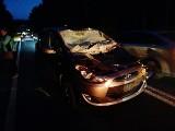 Obrubniki. Hyundai zderzył się z łosiem, zwierzę nie przeżyło (zdjęcia)